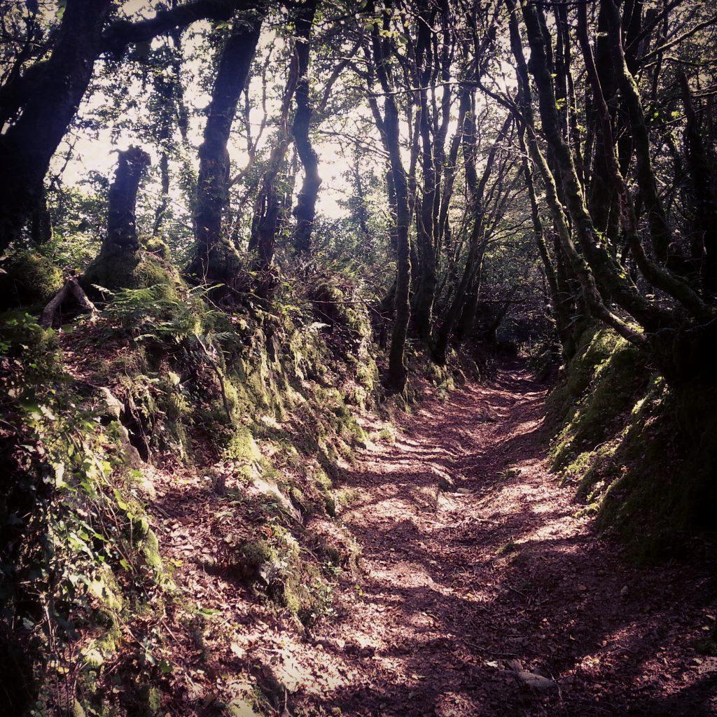 Résonance du barde dans les bois de Neved
