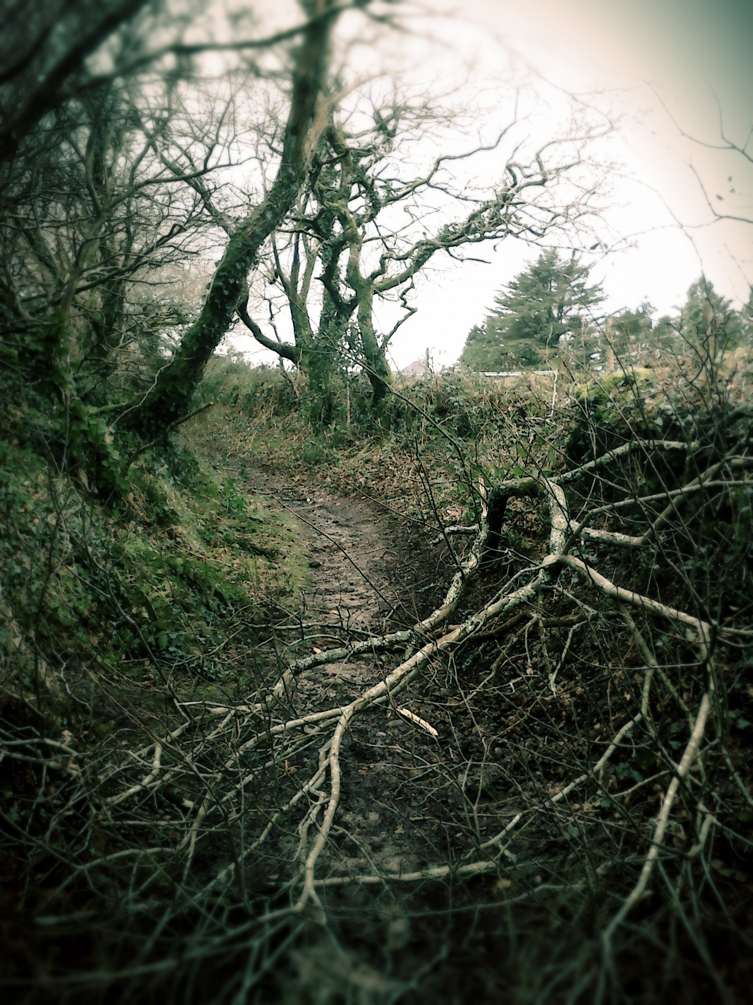 Un barde dans la tempête constate les chutes des branches sur son passage, dans les chemins creux de Lorconan